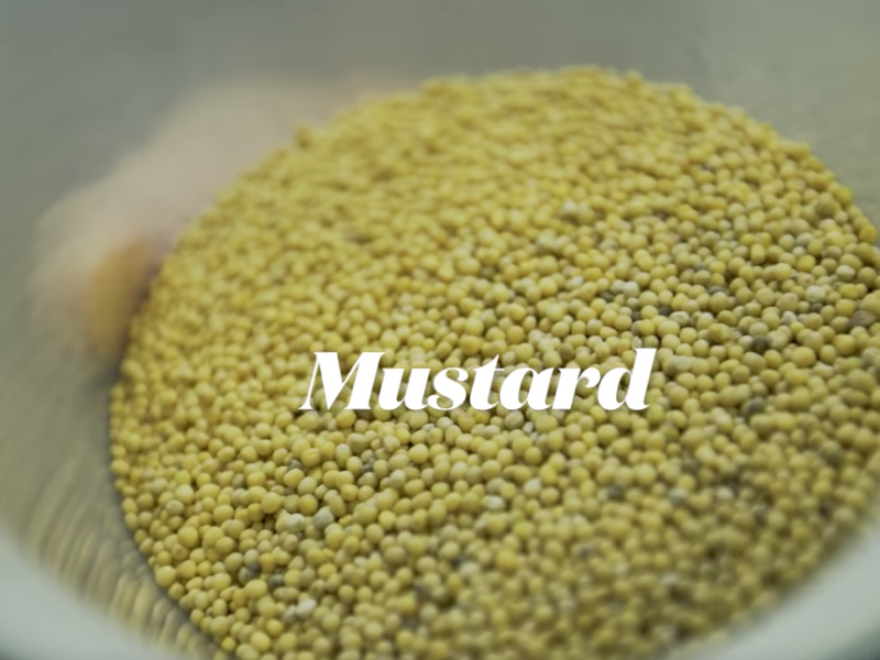 ZAGAT This is Why Chefs are Obsessed with Making Homemade Mustard – Staples, Episode 23